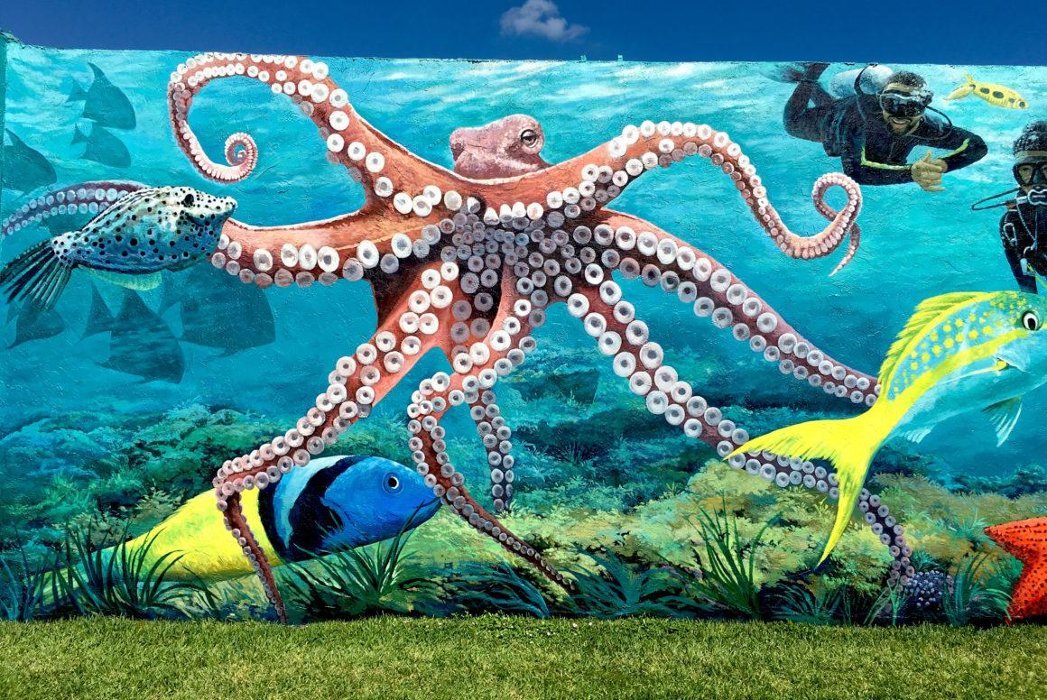 underwater mural detail octopus Vulgaris divers Lake Worth Lagoon snorkeling trail