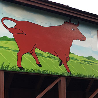 Mural with the bull of the woods, mural on wood panels, a mural for the Coral Springs historic covered bridge