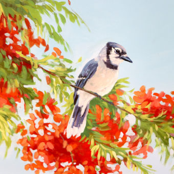 Mural with Blue Jay sitting on poinciana tree